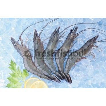 Shrimp Black Tiger (50+pcs/kg)