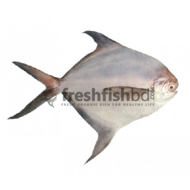 Rupchanda Fish ( 2-4 pcs) Per kg