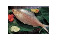 Hilsha Fish(Medium) 1pcs/1kg++