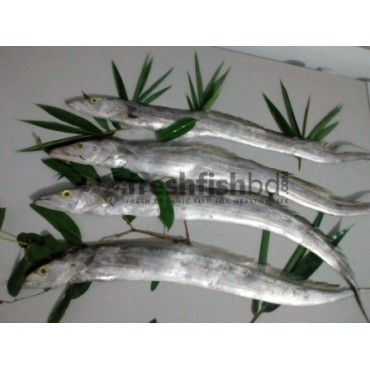 Ribbon Fish (Surri) Large