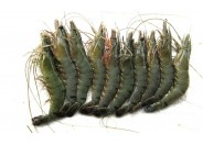 Shrimp Black Tiger (36-40pc/Kg)