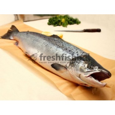 Whole Salmon (Norway) (4-5kg/1pc)