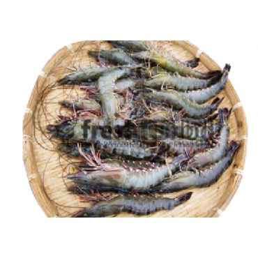 Shrimp Black Tiger (12pc-15pc/Kg)