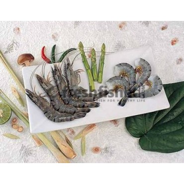 Shrimp Black Tiger (16pc-20pc/Kg)