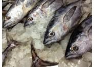 Pin Tuna Fish