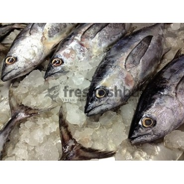 Pin Tuna Fish