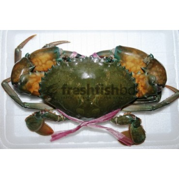Crabs Male (Live)  (450g+/ 1pc) (XXL)