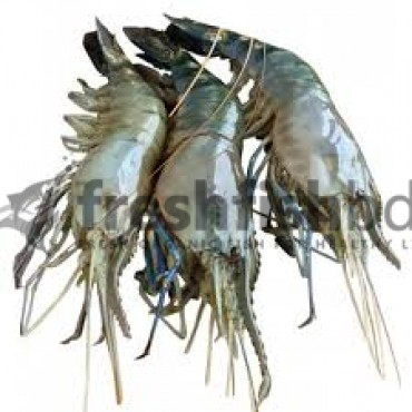Golda Shrimp   (10pc - 15pc)