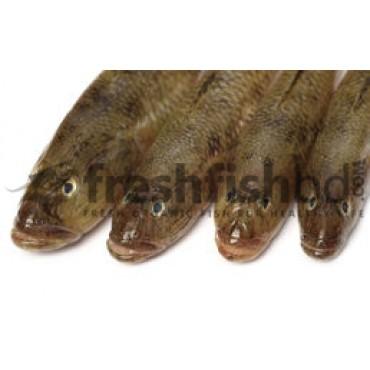 Bele Fish (Medium)