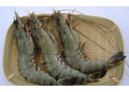 Shrimp Black Tiger (41pc-50pc/Kg)