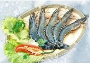 Shrimp Black Tiger (26pcs - 30pcs / Kg)
